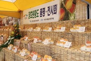 햇사레장호원복숭아축제,경기도 이천시,지역축제,축제정보