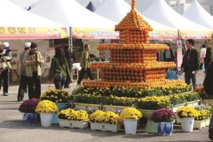 김해 진영단감축제,국내여행,음식정보