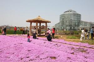 평택 꽃나들이 축제,경기도 평택시,지역축제,축제정보